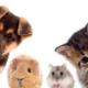 VG Pets Pic e1552876389383