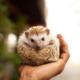hedgehog e1555439066785