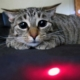 cats and laser pointer