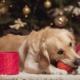 christmas dog gift 1024x683