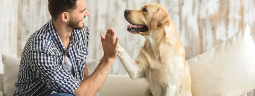 Pet Relationships
